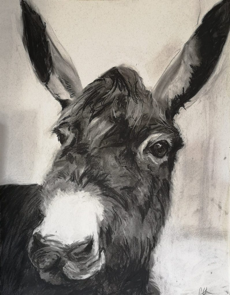 Charcoal donkey from the New Forest on paper in an expressionistic style